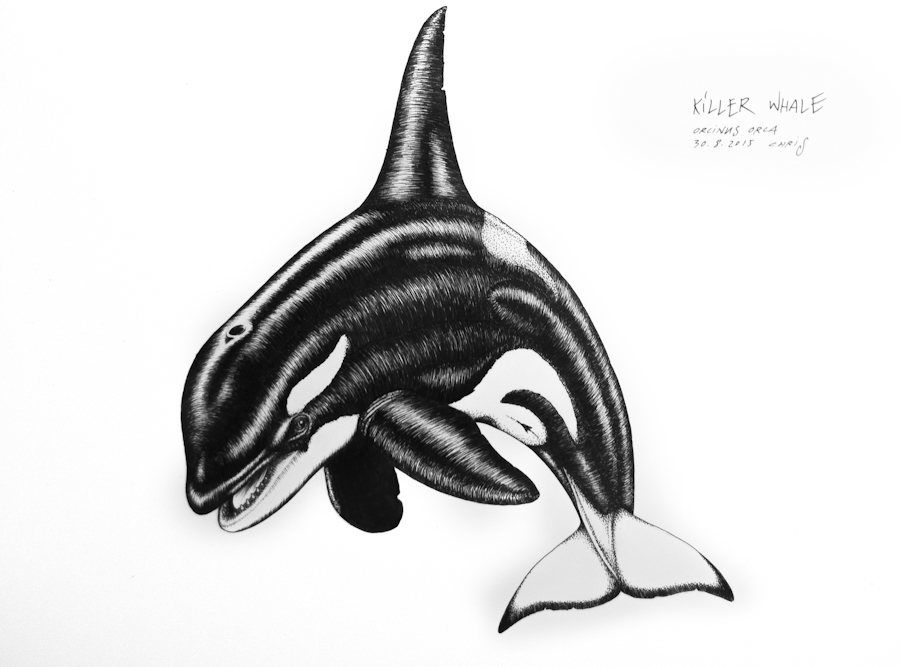 whale drawings & engine problems - Ocean Sounds e.V.