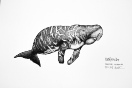 dugong_chris-studer-2015-1-of-1