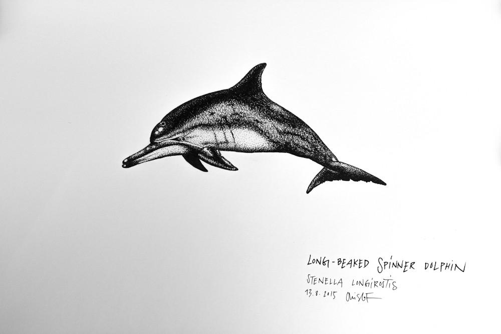 Spinner-Dolphin_Chris-Studer-2015 (1 of 1)