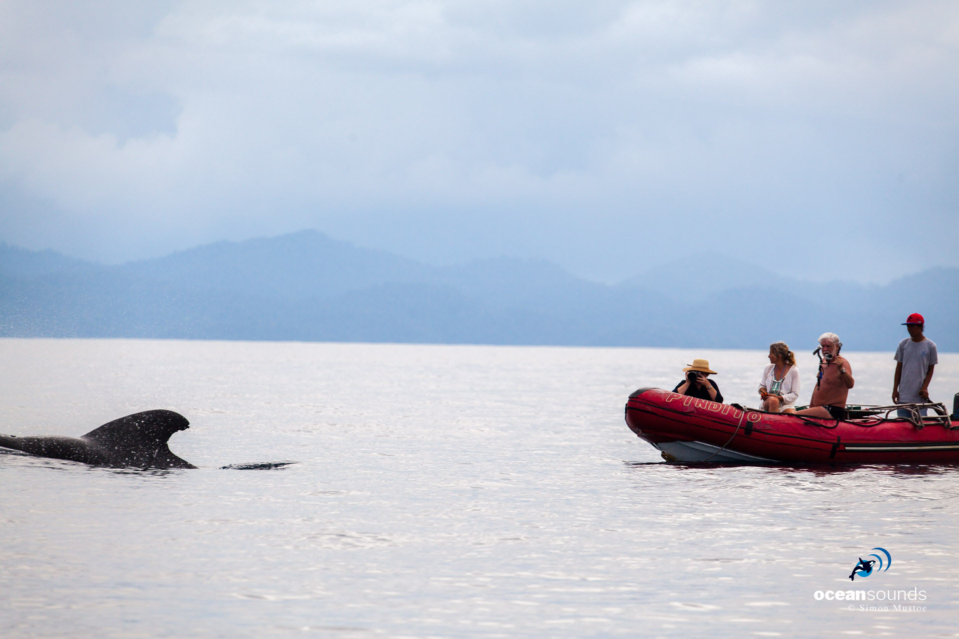 Engines off ... guests on Pindito take photos of a calm group of whales and dolphins.
